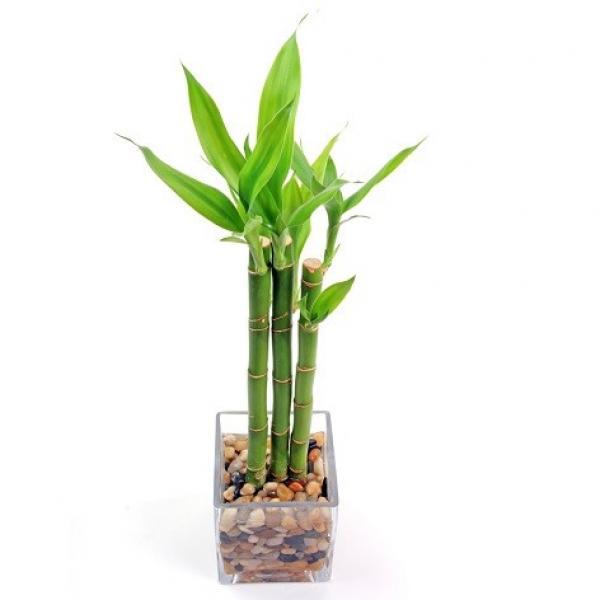 5 plantas que mejoraran el ambiente para tu casa