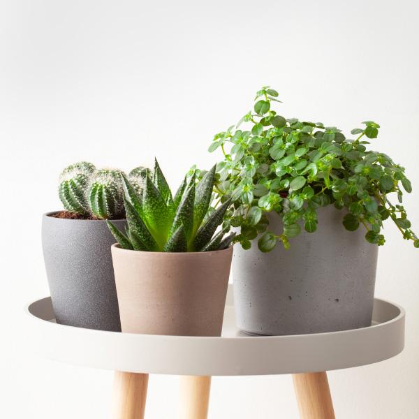 5 plantas que te ayudarán a crear un ambiente más relax en casa