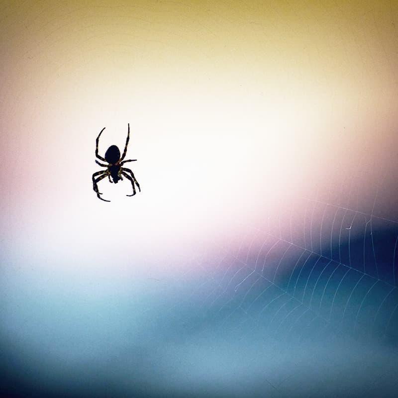 evitar la araña de rincón