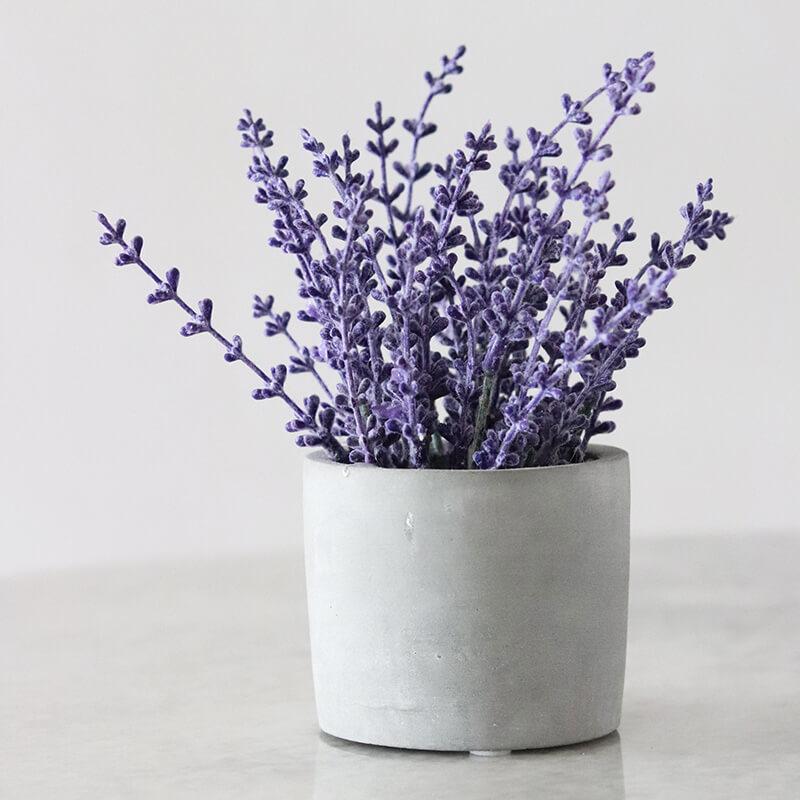 plantas medicinales que puedes plantar tú mismo